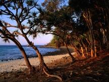 Tea_tree_beach