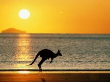The_kangaroo