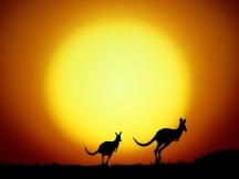 The_kangaroo_hop