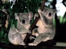 sydney-scenery-australia-travel-24